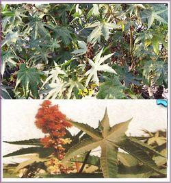 plantes pour renforcer les défenses immunitaires